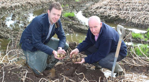 Wilson's Country agronomist Stuart Meredith and managing director Lewis Cunningham examine damaged crop in Moira