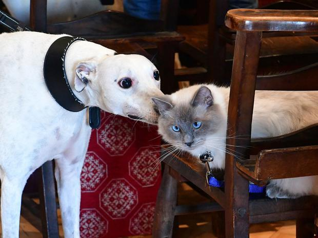 Dogs outnumbered cats by 20 to one at yesterday's Pets' Service at St Anne's Cathedral