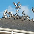 Anita McShane says her Strabane childcare business is being plagued by pigeons