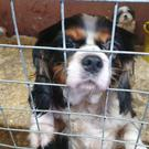 A number of dogs have been rescued by police in Co Tyrone. (PA Archive)