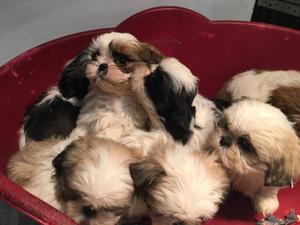 Petition: Dogs which were rescued from a puppy farm