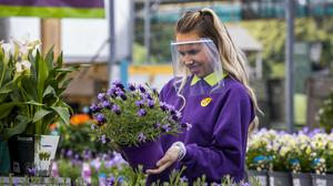 Shop assistant Naomi Ferguson holds a potted plant while wearing a face guard at Hillmount Garden Centres on the outskirts of Belfast (PA)