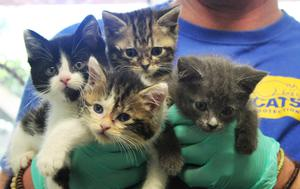 Some of the abandoned kittens waiting to be rehomed
