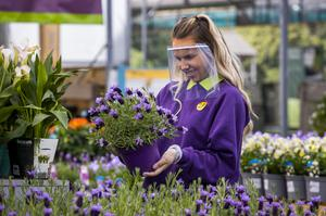 Shop assistant Naomi Ferguson hold a plant at wearing a face guard at Hillmount Garden Centres on the outskirts of Belfast. PA Photo. Picture date: Monday May 07, 2020. See PA story HEALTH Coronavirus Ulster. Photo credit should read: Liam McBurney/PA Wire