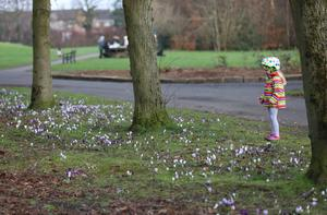 Flowers begin to appear during mild conditions in Ormeau Park