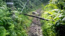 A tree trunk was left lying across one of the paths at Kilbroney Park in Rostrevor
