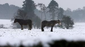 Horses in a field near Larbert, Central Scotland, as freezing temperatures continue to grip the UK