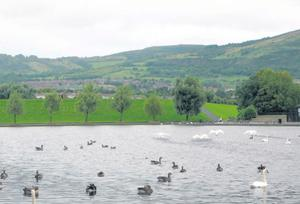 The fight happened in the Waterworks Park in north Belfast