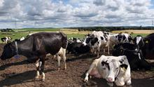 The UK-China Beef Protocol follows years of site inspections (David Cheskin/PA)