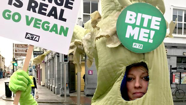 An activist dressed up as a giant stick of celery who targeted two Irish politicians at a polling station at Kilgarvan Central School in Co Kerry (Peta/PA)