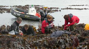 Scientists from the Station Biologique de Roscoff in France working on kelp (Christophe Destombe/PA)