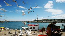 There have been calls by Irish politicians to cull seagulls
