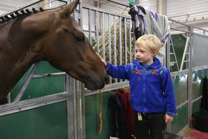 James Potterton greets Westwinds Mackenzie at the Discover Ireland Dublin Horse Show at the RDS