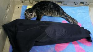 Galaxy seems very fond of her 'wetsuit mum' (Brian Lawless/PA)