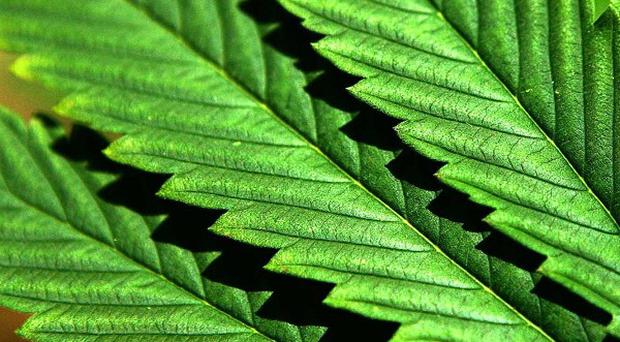 A haul of suspected cannabis herb has been sent for forensic tests after a raid at a house in Cork