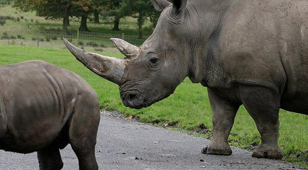 Rhino horns have been targeted at museums and private collections in Europe