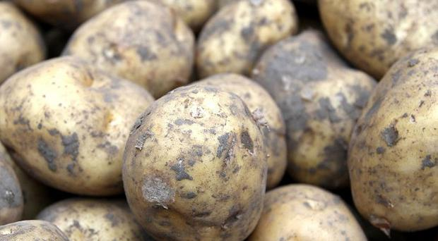 A strain of potato blight thought to have caused the deadly famine has been identified by scientists