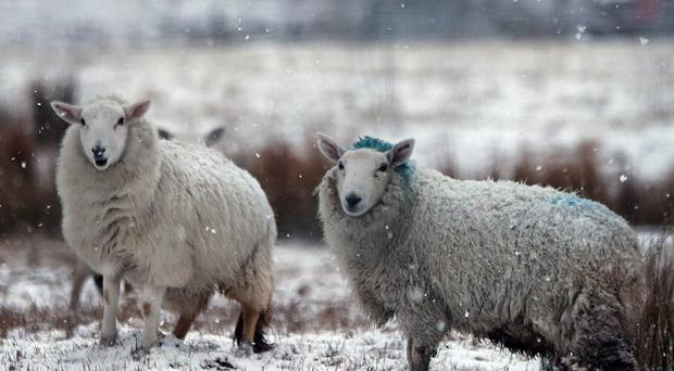 Parts of Ireland experienced the coldest spring in 62 years, says Met Eireann