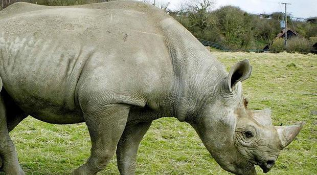 A man has admitted using forged documents to sell horns from endangered black rhinos