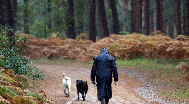 Almost nine in 10 peopl believe that dog owners should clean up their mess, a study has found