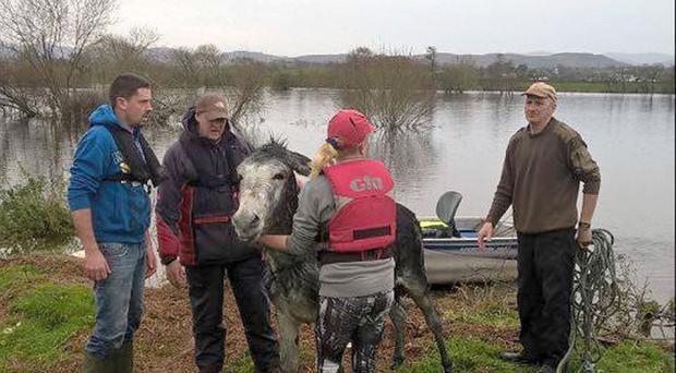 A donkey being rescued from a flooded field in Killorglin, Co Kerry