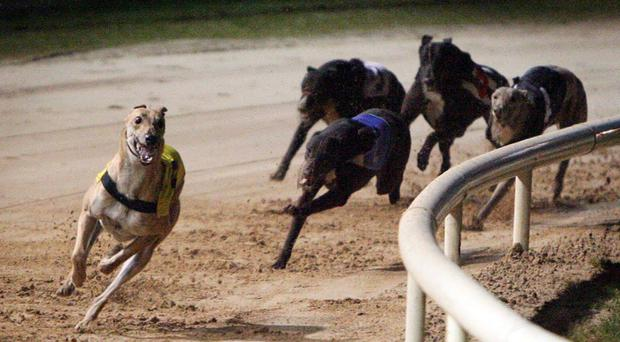 Irish Greyhound Board wants Harold's Cross dog track to be rezoned for housing