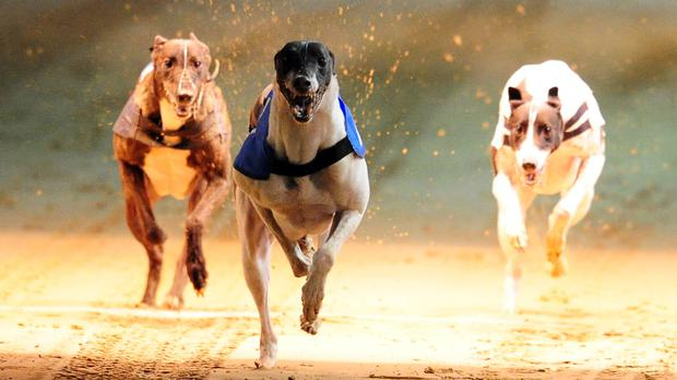 Dogs Trust urged greyhound racing owners to better plan for their animal's future when it retires