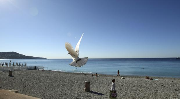 A white pigeon flies over the beach near the scene of the attack in Nice (AP)