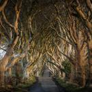 The Dark Hedges near Armoy, Co Antrim, were made famous by Game of Thrones (Northern Ireland Tourist Board)