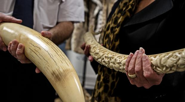 Elephant tusk and carved ivory, as campaigners said the internet had turned into a huge supermarket for trade in illegal animal products (WWF/PA)