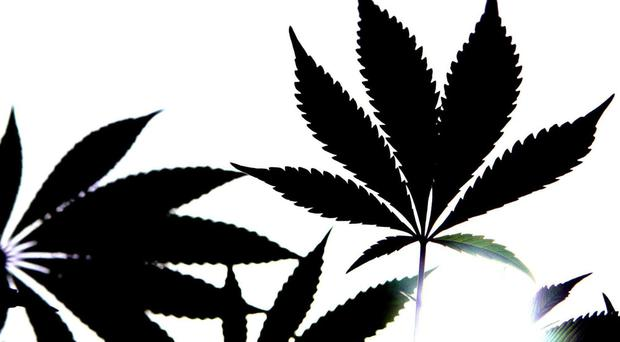Report stated that patients accessing cannabis through the programme should be under the care of a medical consultant