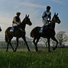 Cyrus Darius will be hard to beat in the Timeform Morebattle Hurdle at Kelso today (stock picture)