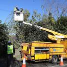 ESB workers attend to power lines damaged by a fallen tree