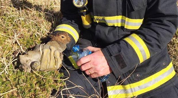 Fireman Tom Collins rescues a rabbit from a raging gorse fire in West Cork (Cork County Fire Service)