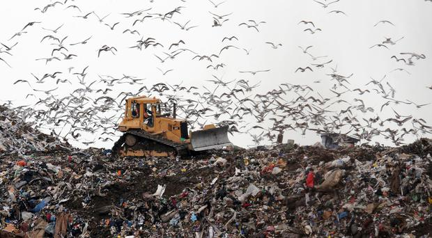 Birds look for food at the Seaton Meadows Landfill site in Hartlepool as workers clear the Rubbish.