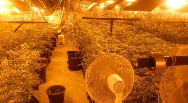 Gardai found the cannabis plants in a garage on the property near Abbeylara, Co Longford (Garda/PA)