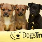Terrier puppies, Tayana, Tefi and Timoti are recovering with the Dogs Trust (Fran Veale/PA)
