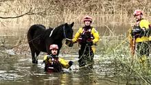 A pony is rescued from floodwater in a field beside the River Wey in Guildford (RSPCA/PA)