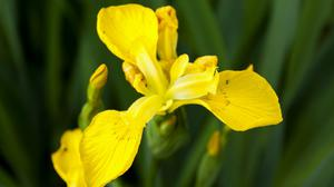 Plants at Sandilands will include yellow flag iris (National Trust/Robert Morris/PA)