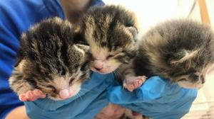 The three kittens (Cats Protection/PA)