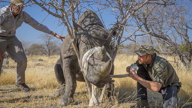 Prince Harry in Botswana as part of his conservation efforts (Kensington Palace/PA)