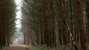 People are being urged to avoid visiting the nation's woods and forests (John Walton/PA)