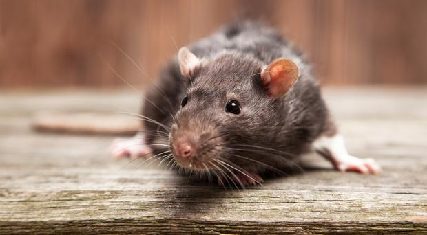 The intruder was believed to be a mouse (GeorgeDolgikh/Getty Images)