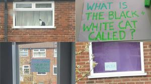 A pair of neighbours exchange information about a local cat through their windows (Sian Cosgrove)
