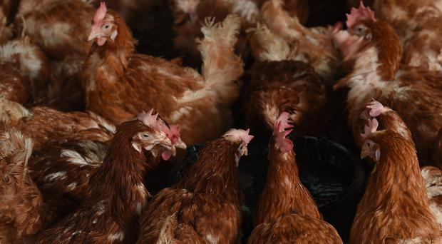 Poultry farmers have been put on alert (Joe Giddens/PA)