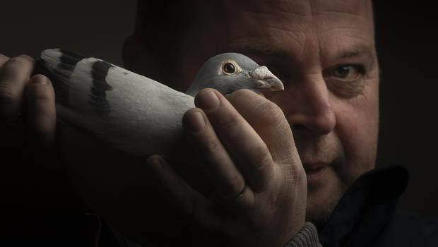Timmy Mawhinney holding his 200 mile category champion racing pigeon (Danny Lawson/PA)