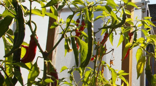 Eating chillies regularly 'reduces risk of death from a heart attack' (Chris Ison/PA)