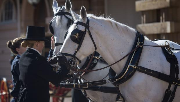 Two Windsor Greys, which will pull the carriage at the wedding of Prince Harry and Meghan Markle, are groomed at the Royal Mews at Buckingham Palace