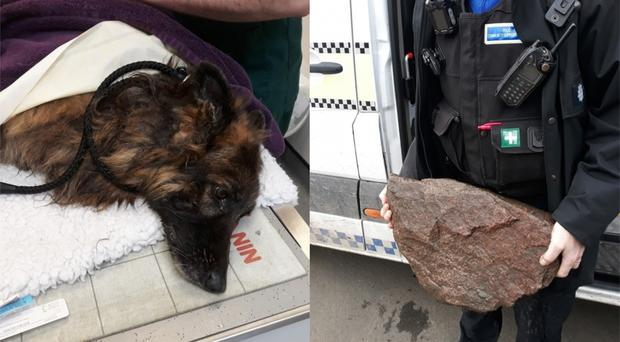 A Belgian Shepherd that was found drowning in the River Trent (Nottinghamshire Police)