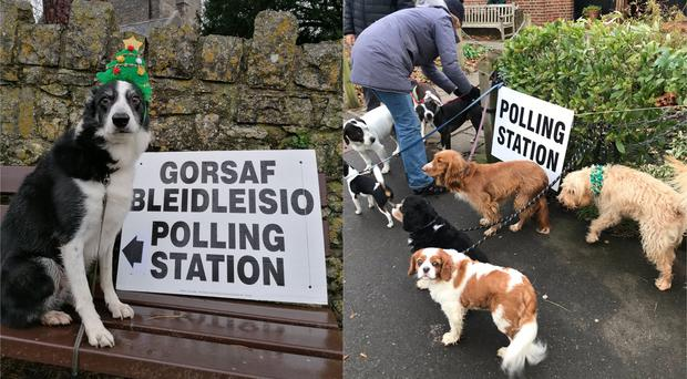 Dogs at polling stations (Esyllt Sears/Kate Turner/PA)